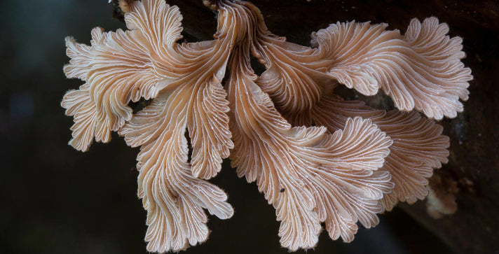 'The Kingdom: How Fungi Made the World' screening