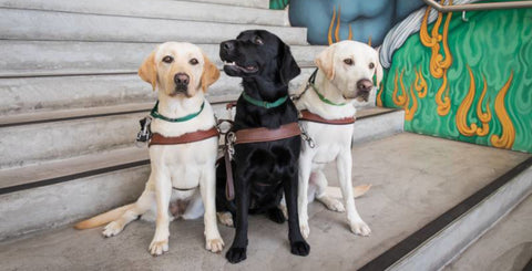 Meet and greet a Guide Dog