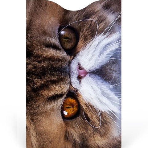 Cats Credit Card Sleeve