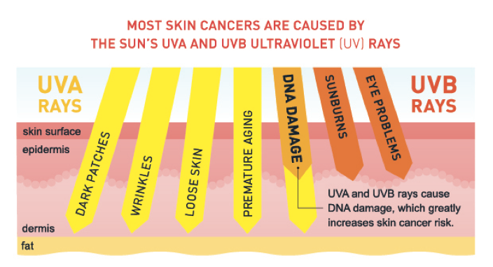 UVA and UVB rays explained
