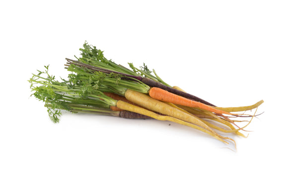 Heirloom Dutch Carrots