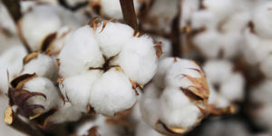 Five things you might not know about cotton