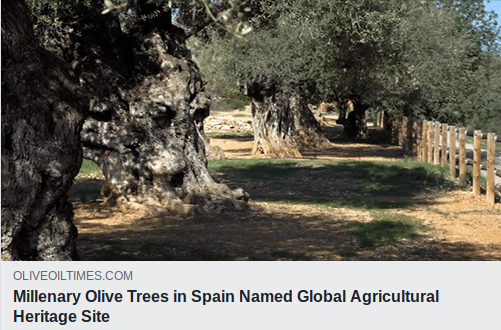 Millenary Olive Tress Named Global Agricultural Heritage Site