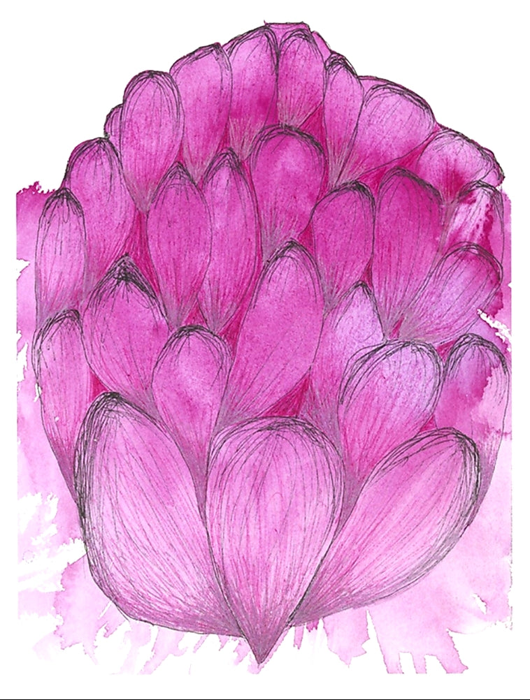 Pink Waratah botanical Watercolour wall art print Melbourne