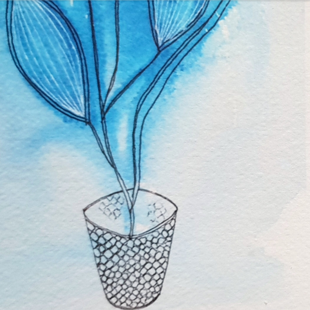 Blue Wash botanical art