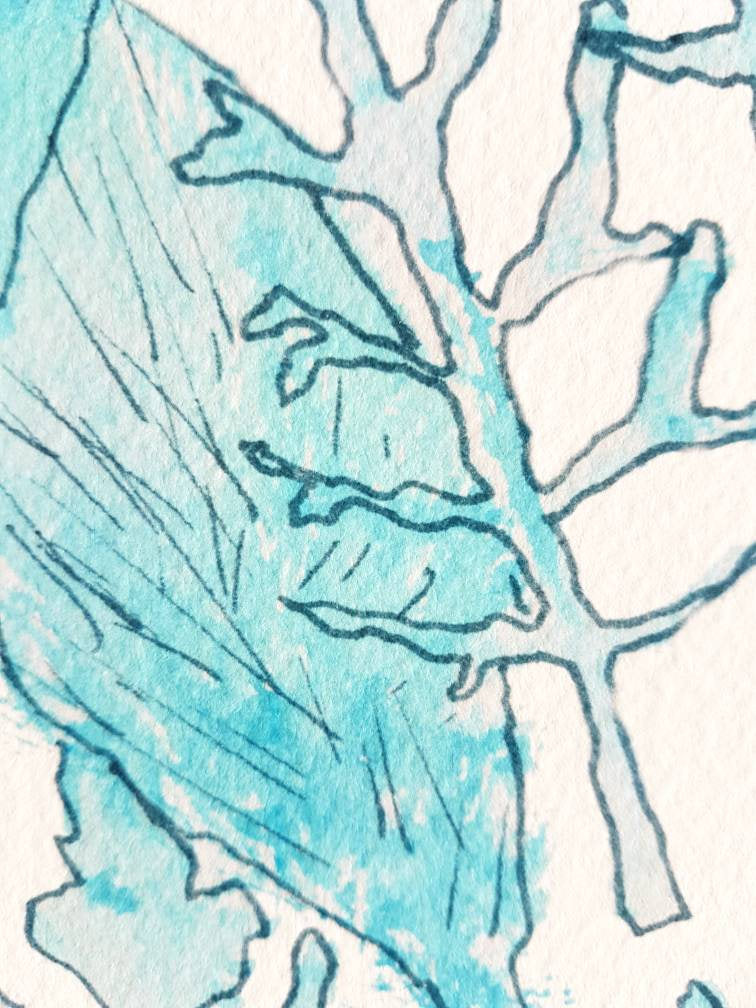Leaf Study in Blue Ink with aqua watercolour, printed on archival paper for Minnie&Lou