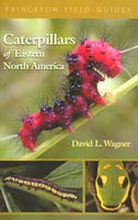 Caterpillars of Eastern North America