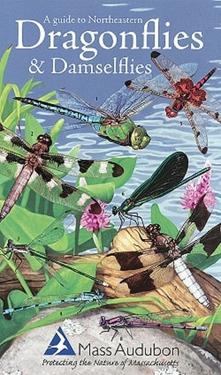 A Guide to Northeastern Dragonflies & Damselflies