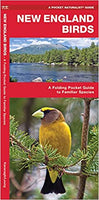 Pocket Naturalist Guide-New England Birds