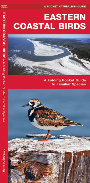 Pocket Naturalist Guide-Eastern Coastal Birds
