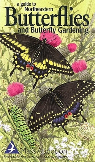 A Guide to Northeastern Butterflies & Butterfly Gardening