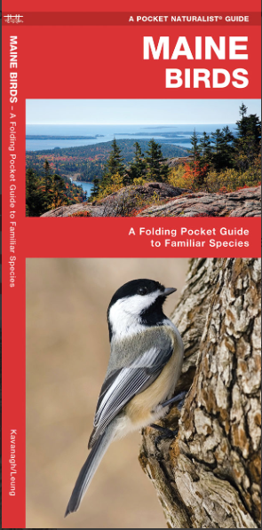Pocket Naturalist Guide-Maine Birds