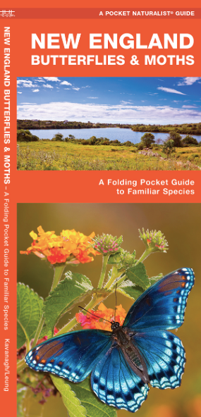 Pocket Naturalist Guide-New England Butterflies & Moths