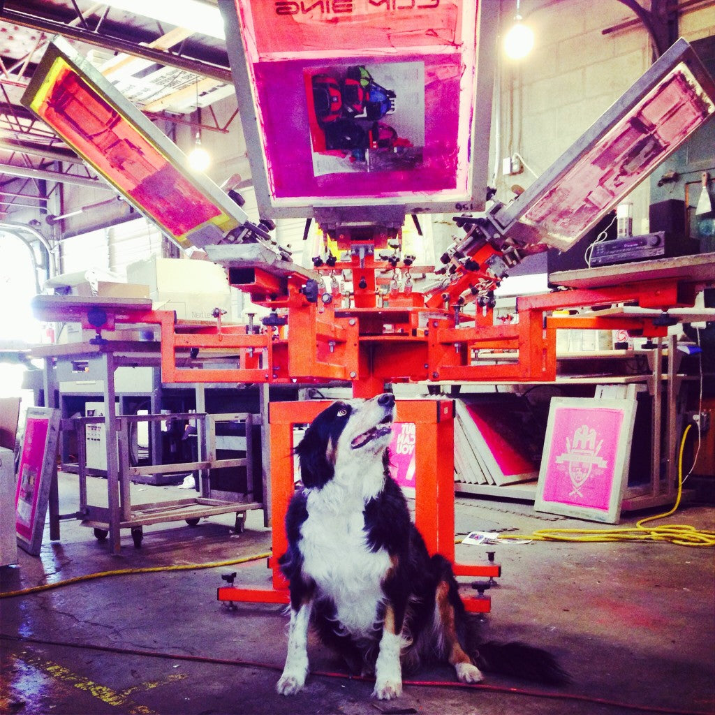 Mila the shop dog in the screen printing shop.