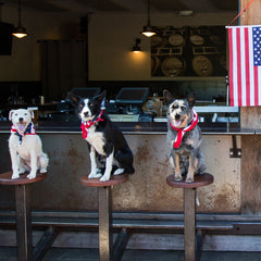 JD Platt's show dogs sitting on barstools in front of the American flag.