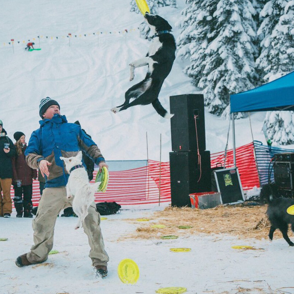 JD Platt in the snow with one of his show dogs flipping through the air to catch a frisbee.