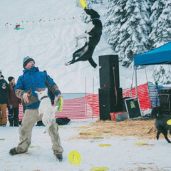 JD Platt's dog flying through the air with a frisbee.