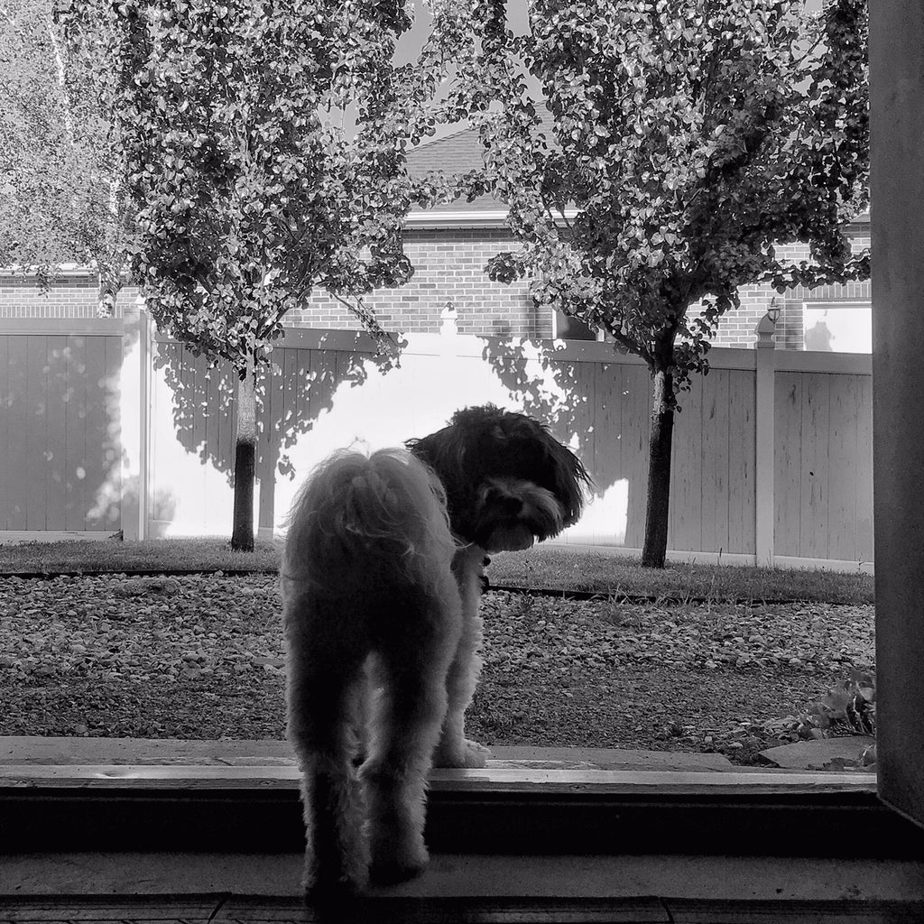 Black & white photo of Mozzy the dog standing in a doorway looking back.