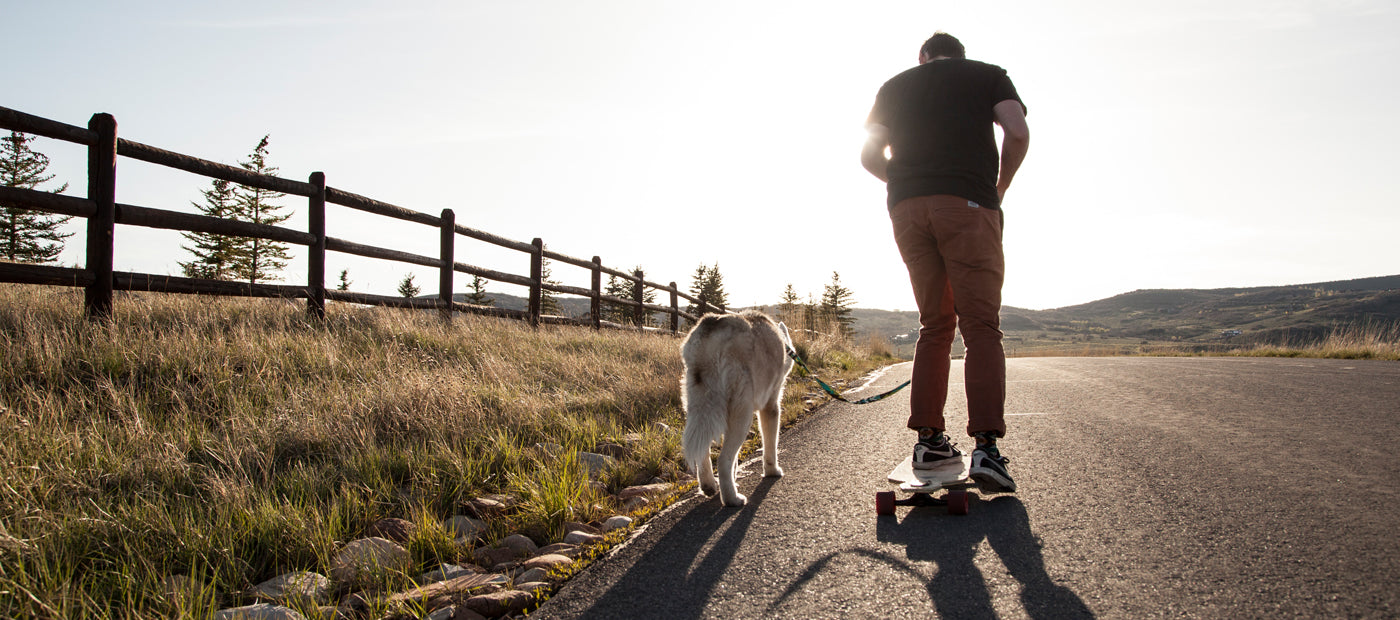 skateboarder with husky riding into the sunset. Links to legacy Wolfgang image page.
