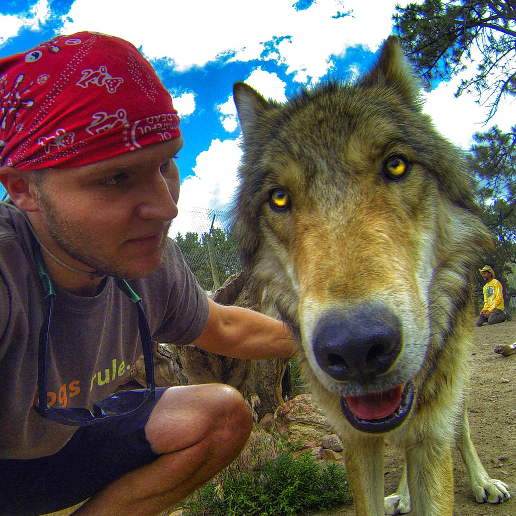 Thomas Davis working with a wolfdog.