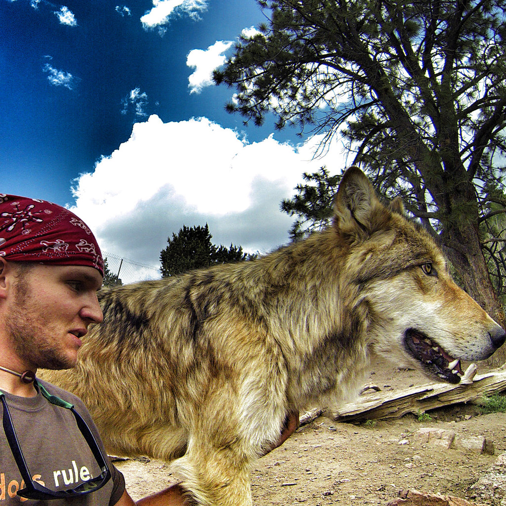 Thomas Davis and a beautiful wolfdog.