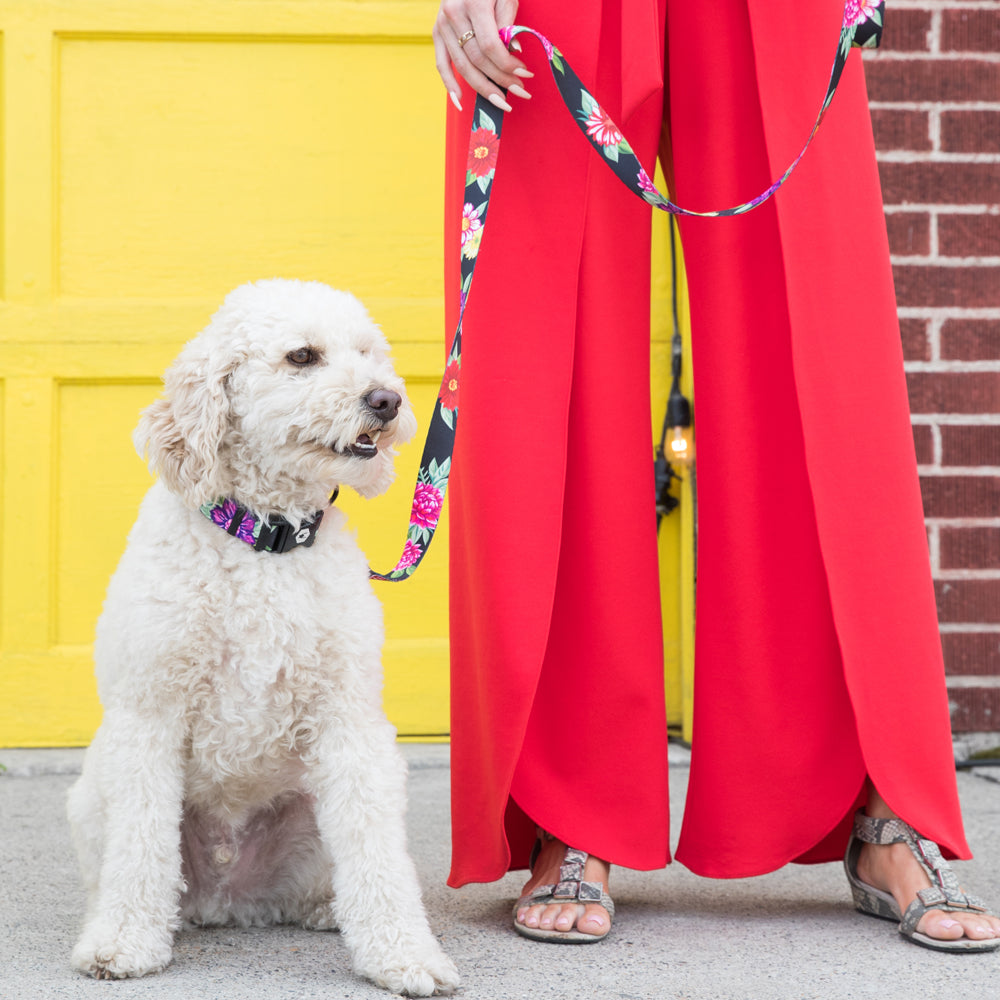 Doodle dog wearing dark floral collar and leash being held by girl in bright red pants.
