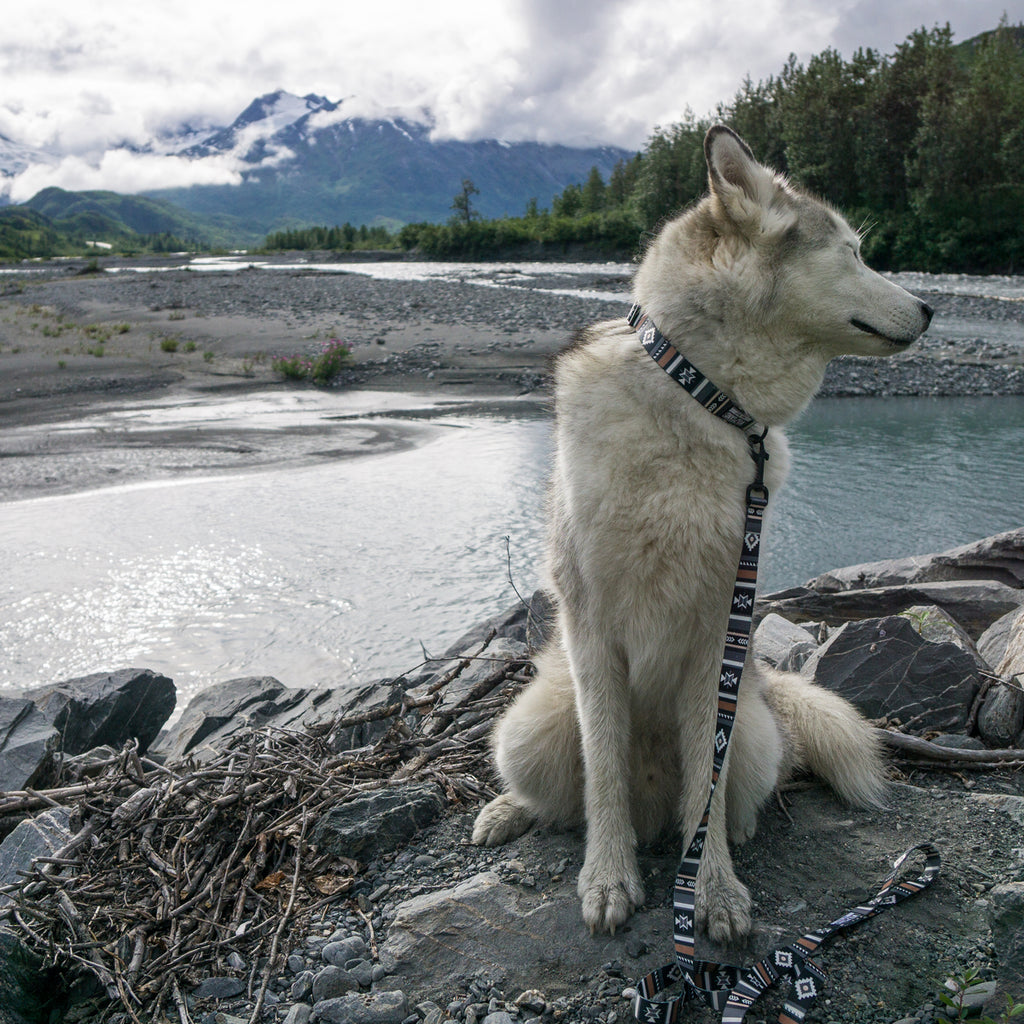 Loki the Wolfdog sitting by a river wearing a Wolfgang LokiWolf dog collar and leash.