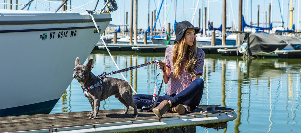 Dark brindle french bulldog wearing Wolfgang NativeLines comfort dog harness and leash on a dock in a harbor.