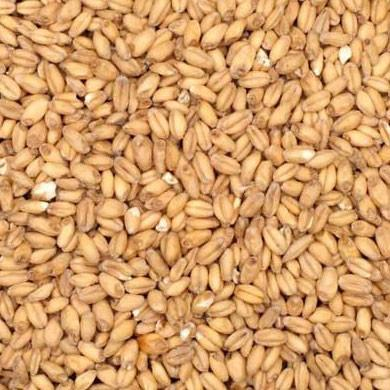 Malt - Malted Wheat