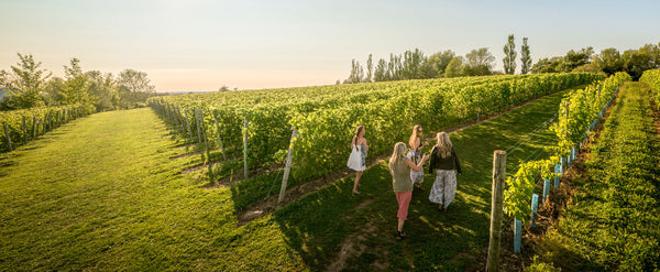 Photo of sunset over a vineyard with three people amongst the vines