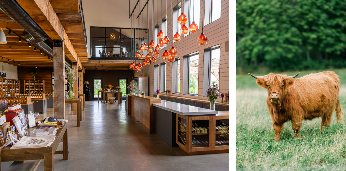Two images - left, of Lightfoot & Wolfville tasting room and right, brown cattle in green field