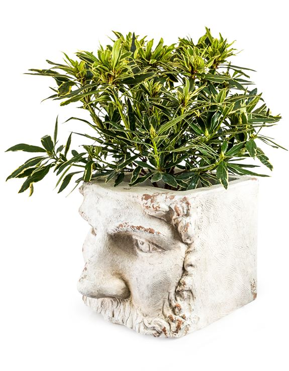Large Rustic White Stone Effect Classical Face Planter 45 x 36 x  35 cm