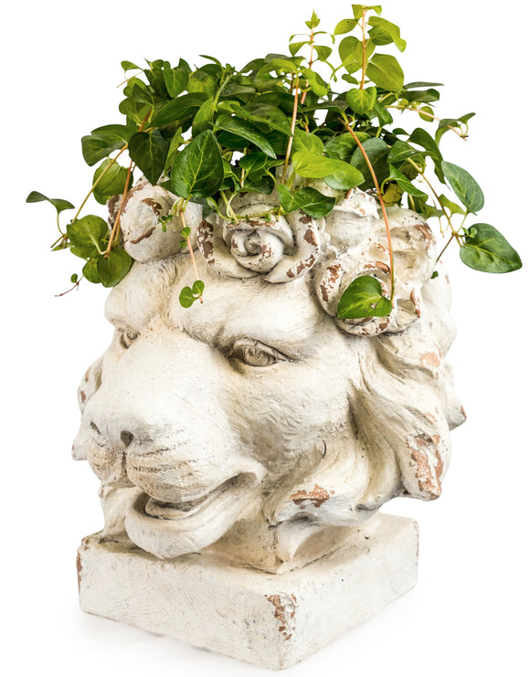 Large Rustic White Stone Effect Lion Head Planter 40 x 43 x  36 cm
