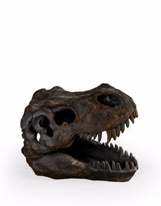 T-Rex Dinosaur Skull Table Shelf Decoration  16 x 12 x 20 cm