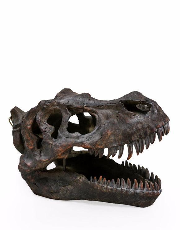 Large Repro Tyrannosaurus Rex Dinosaur Skull Wall Hanging - Expected January 2021