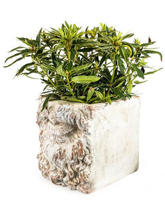Rustic White Stone Effect Classical Mouth Planter 38 x 36 x  36 cm