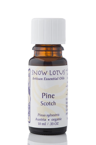 Pine Scotch Essential Oil 10ml