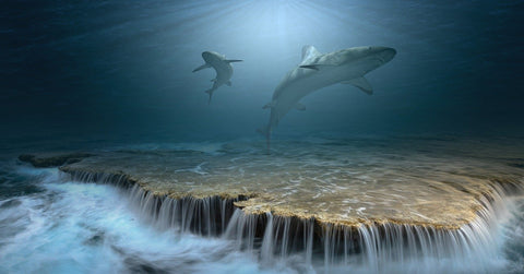 Sharks Swimming and Flowing
