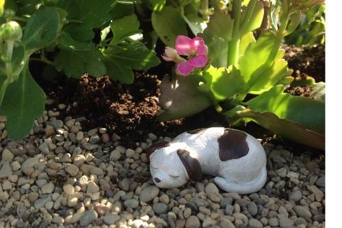 Lucy The Puppy - MyFairyGardens.com