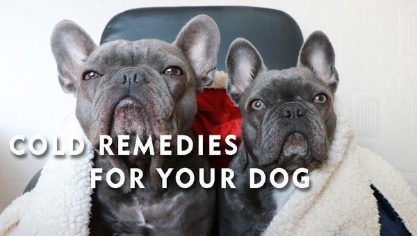 Cold Remedies For Your Dog🐶🤧