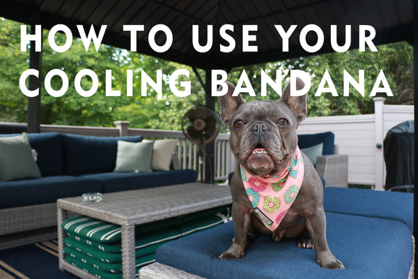 How To Use Your Cooling Bandanas! 💦