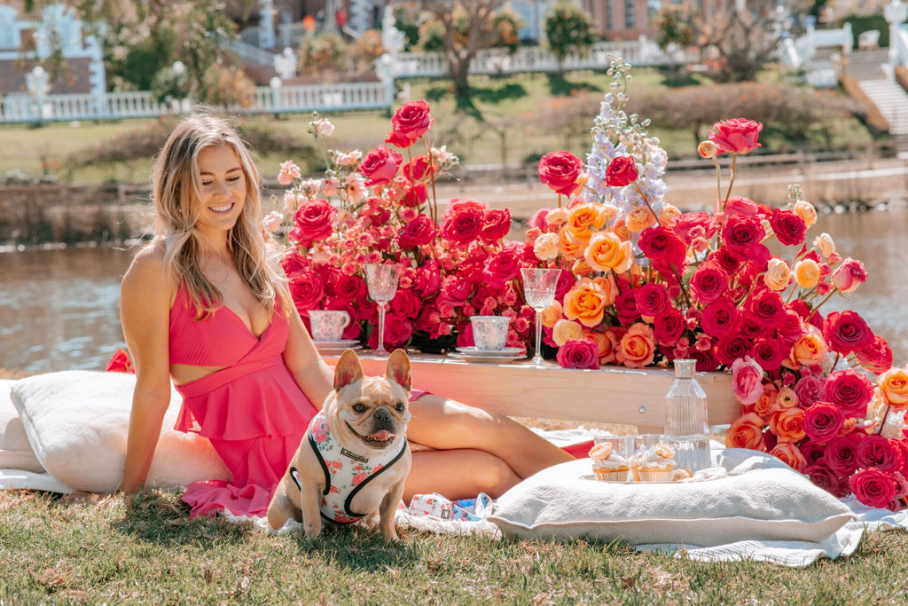 How To Plan The Perfect Picnic With Your Pup