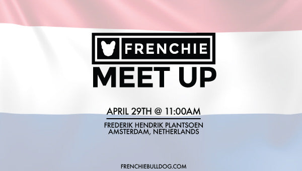 Frenchie Bulldog Meet Up- Amsterdam, Netherlands 🇳🇱