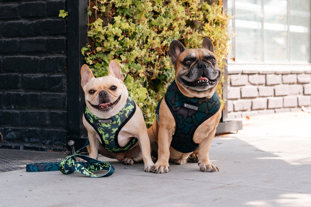 Duo Reversible Harness