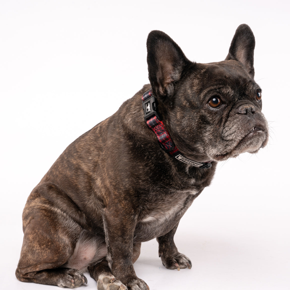 Frenchie Comfort Collar - Lumberjack