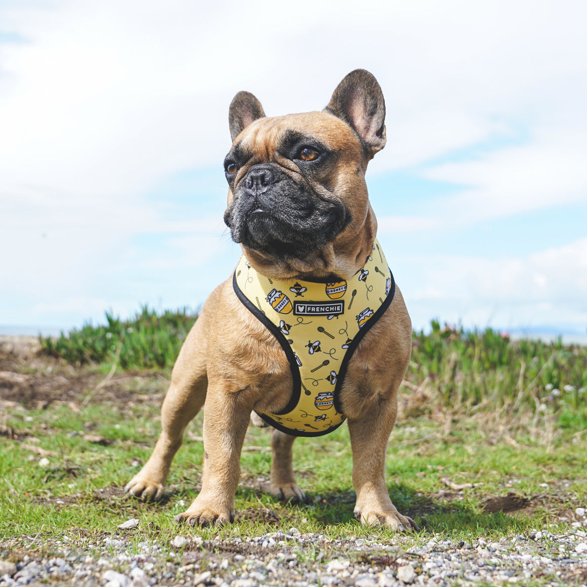 Frenchie Duo Reversible Harness - Honeybee
