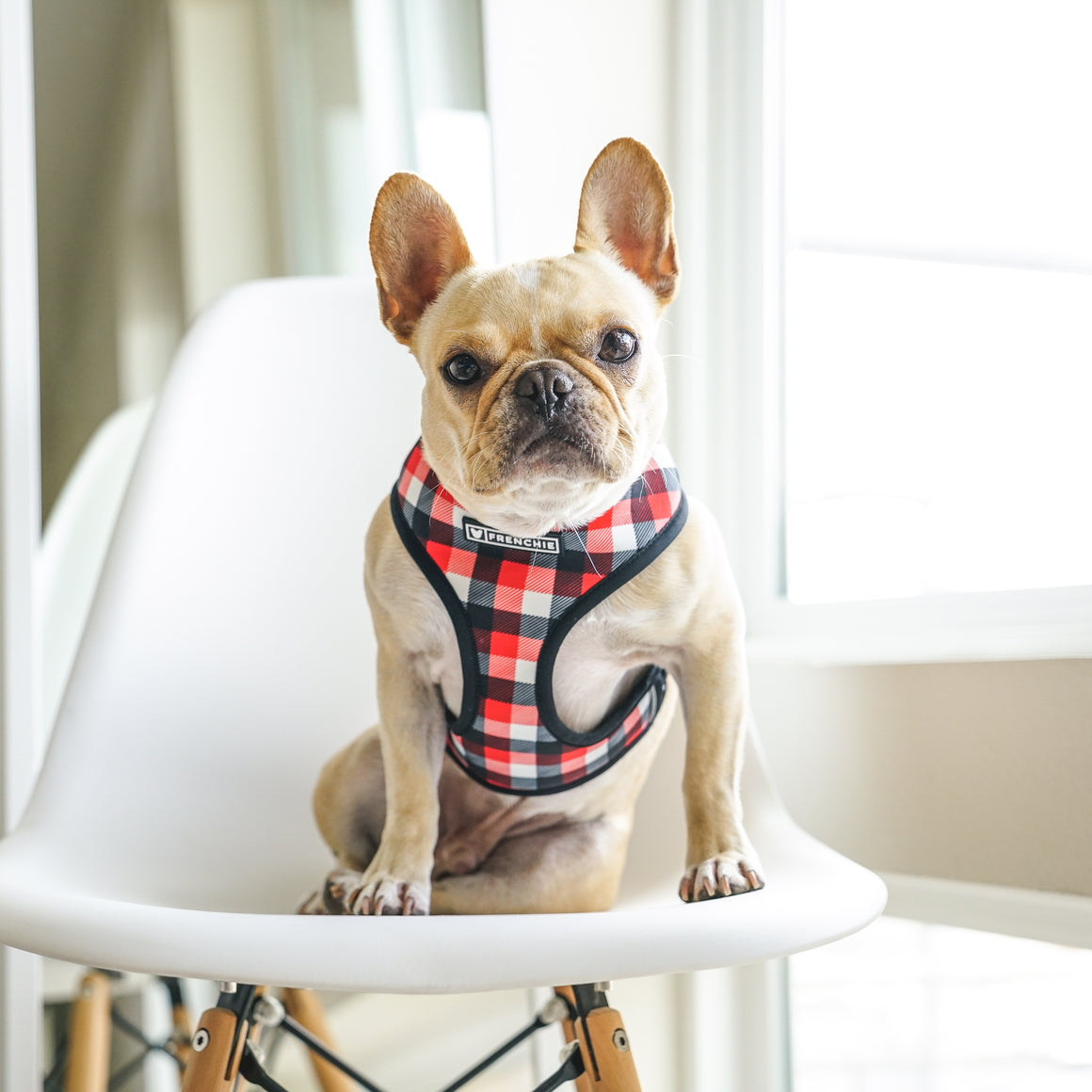Frenchie Duo Reversible Harness - Red Plaid