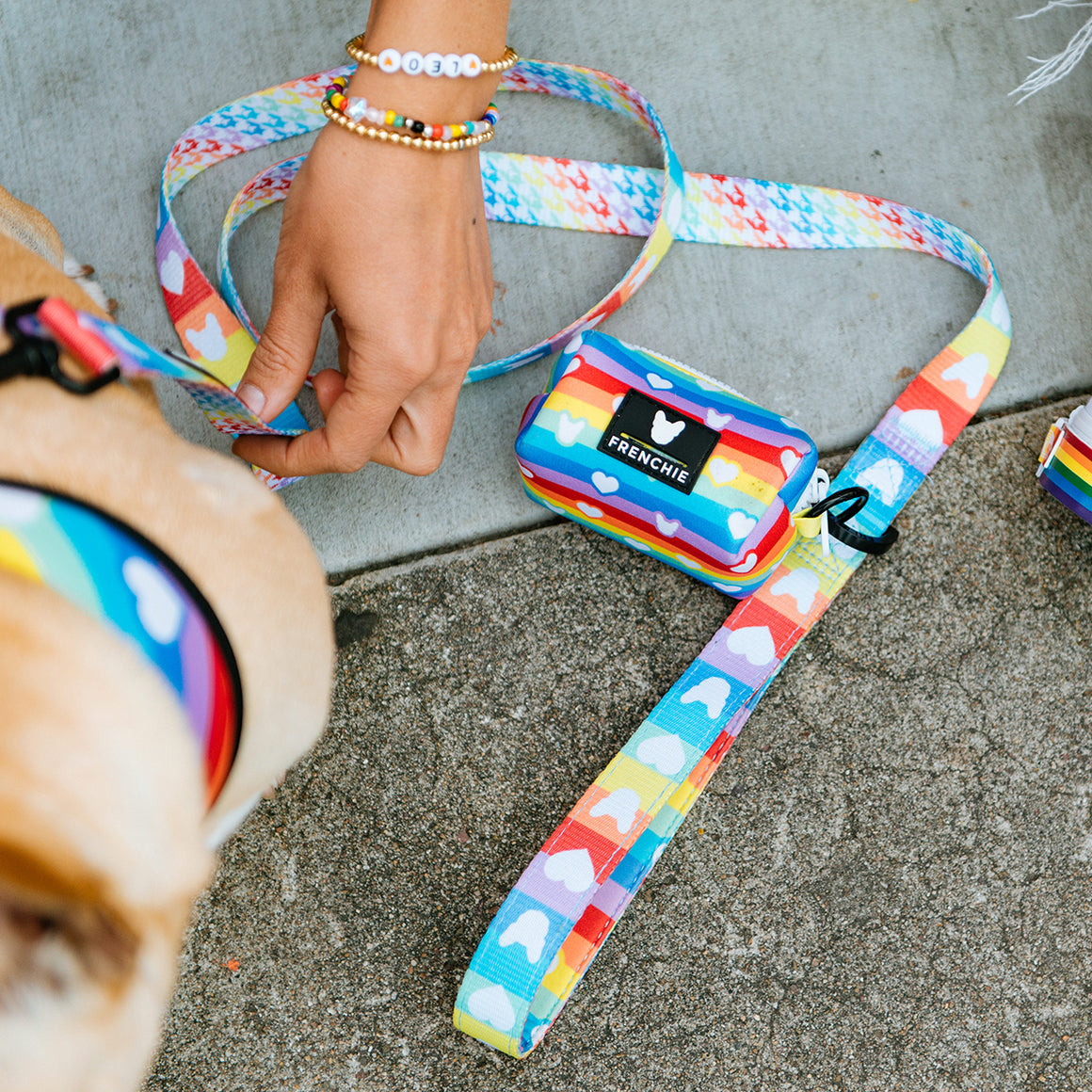 Frenchie Comfort Leash - Pride