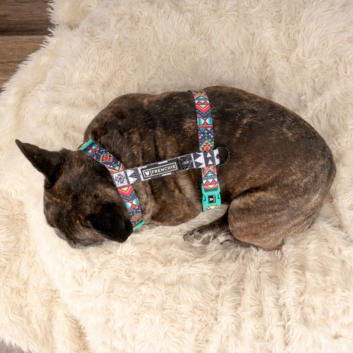Frenchie Strap Harness - Aztec