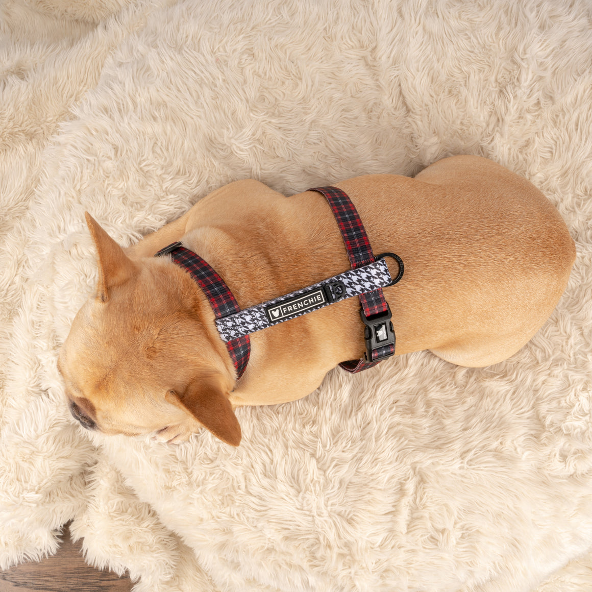 Frenchie Strap Harness - Lumberjack